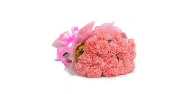 Pink Carnation Flowers