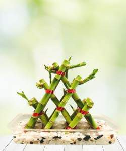 Three Layer Lucky Pyramid Bamboo