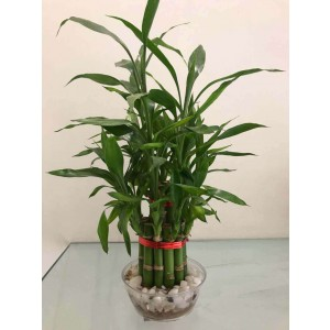 Two Layer Small Bamboo